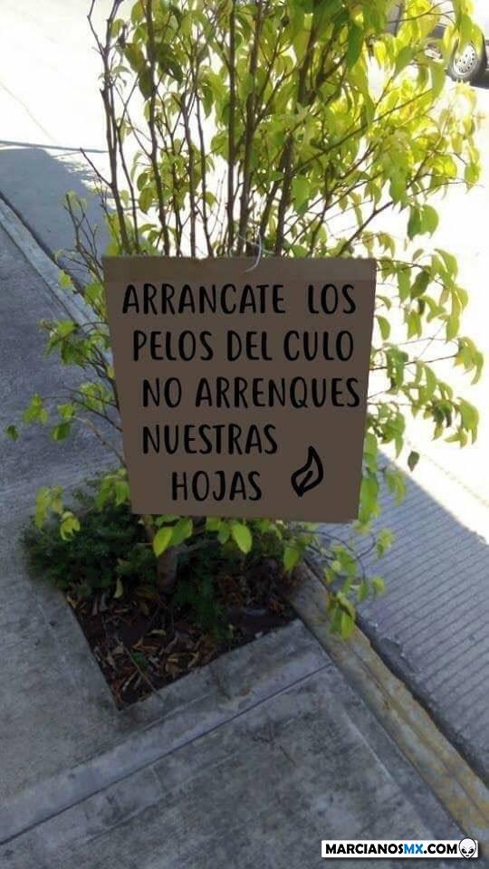 Marcianadas 405 08112019001119 (176)