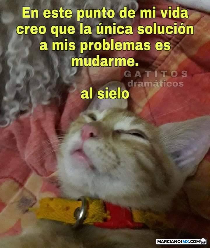 Marcianadas 406 15112019001452 (4)