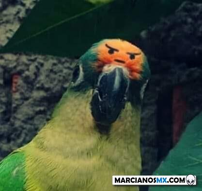 Marcianadas 407 22112019001341 (228)