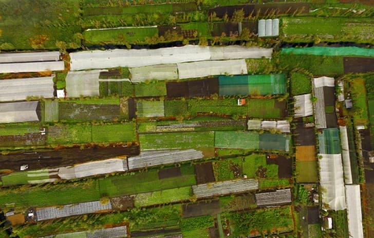 agricultura de chinampas en xochimilco