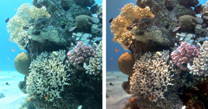 arrecifes de coral sin agua colores reales