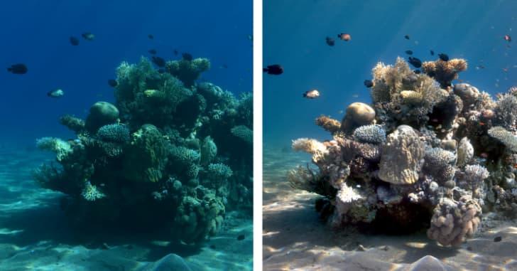 imagen del fondo marino sin agua