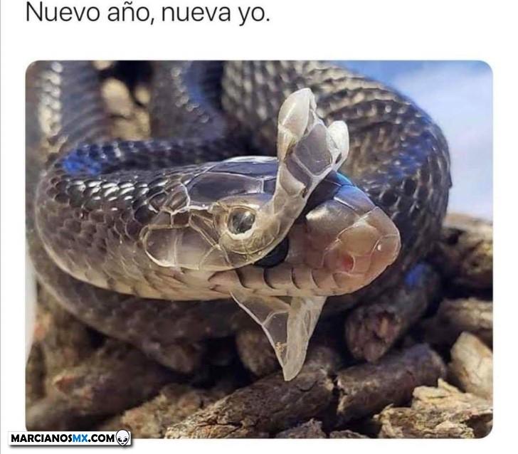 Marcianadas 409 06122019001227 (97)