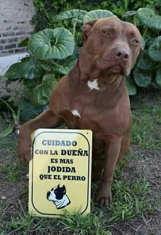 Marcianadas 410 13122019001525 (11)