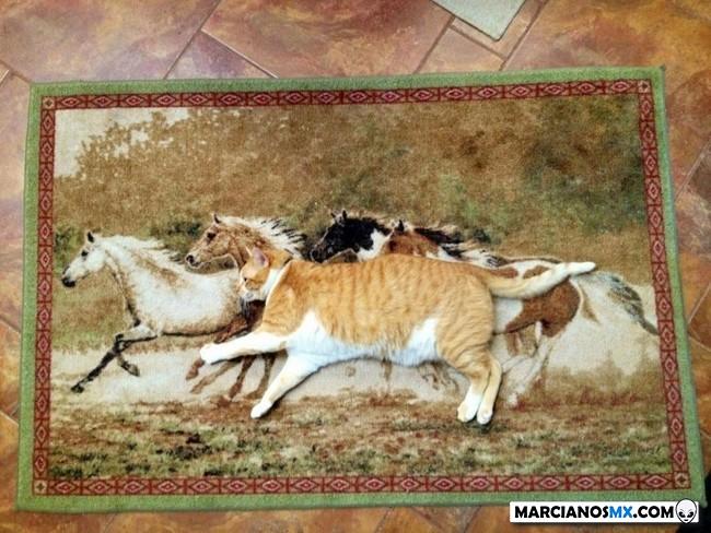 Marcianadas 411 20122019001133Ultimas2019 (102)