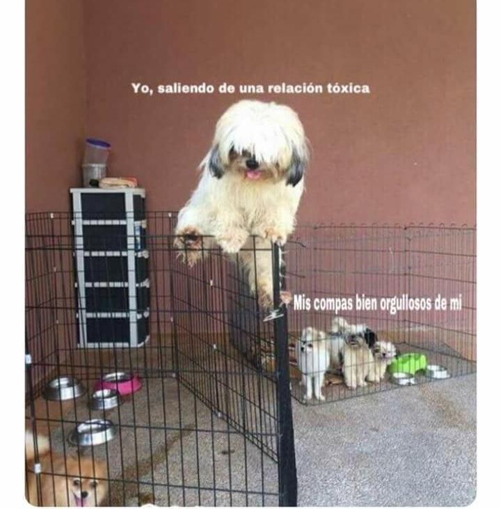 Marcianadas 411 20122019002003Ultimas2019 (13)