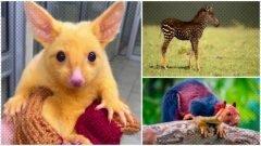 9 animales con mutaciones genéticas raras e interesantes