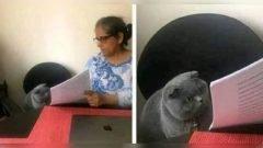 Gatos poseen expresiones faciales que los humanos no comprenden