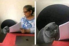 el meme del gato en el examen