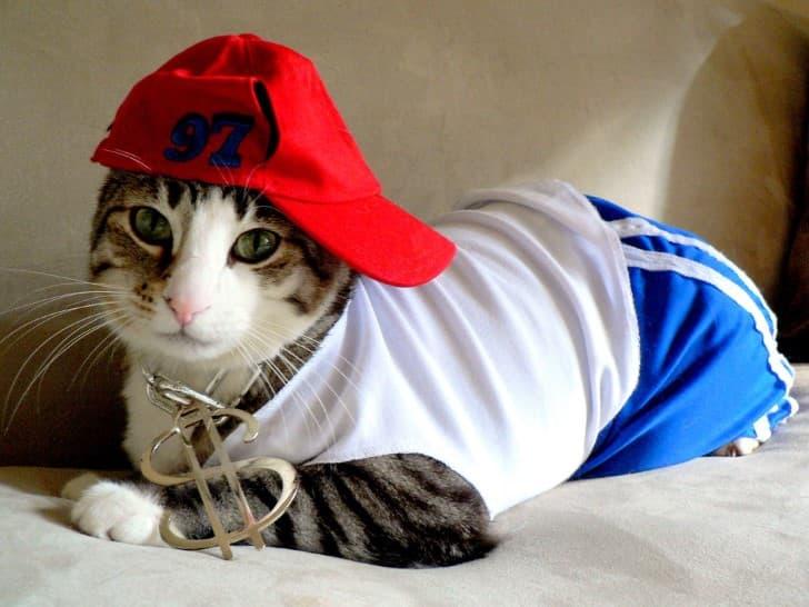 gato ganster