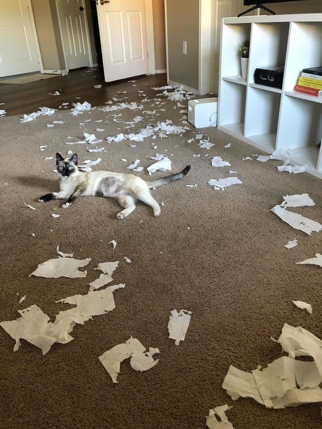 gatos malvados (1)