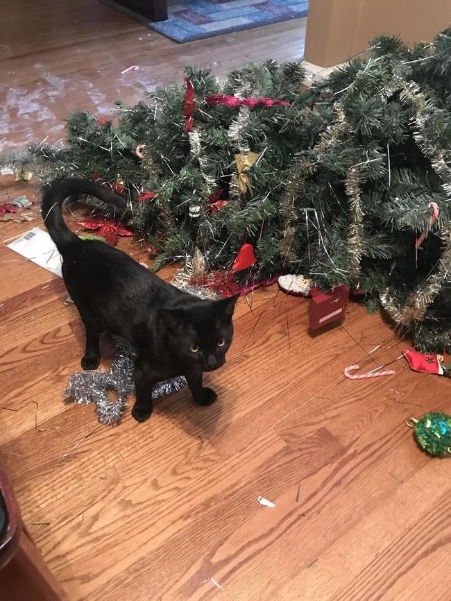 gatos malvados (10)