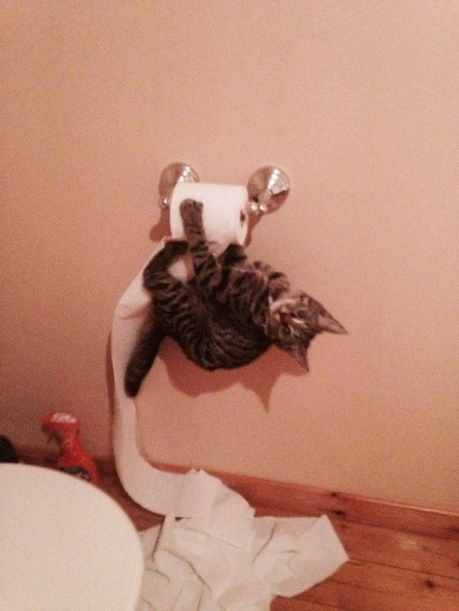 gatos malvados (11)