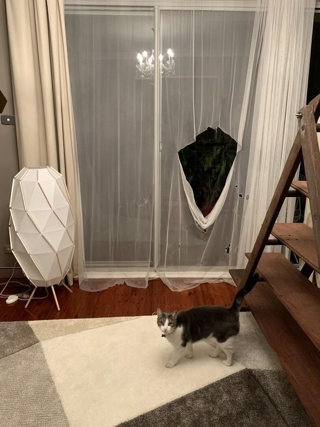 gatos malvados (12)