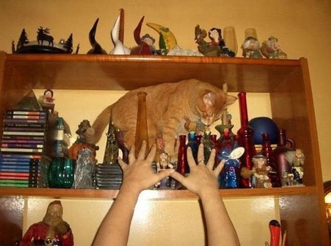 gatos malvados (13)