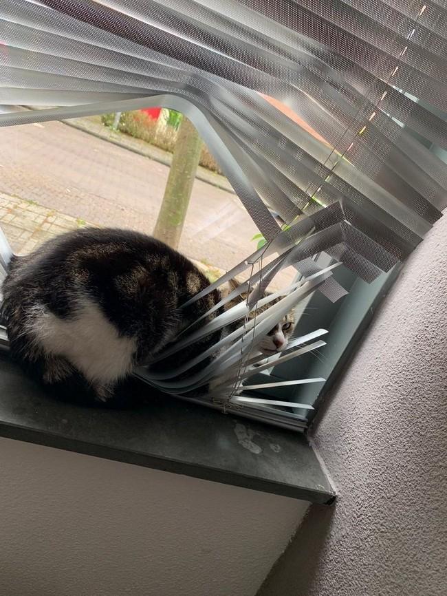 gatos malvados (17)