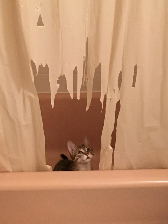 gatos malvados (18)