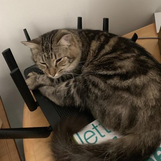 gatos malvados (19)