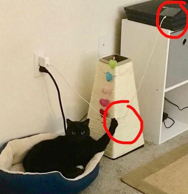 gatos malvados (22)