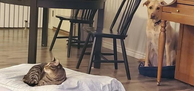 gatos malvados (23)
