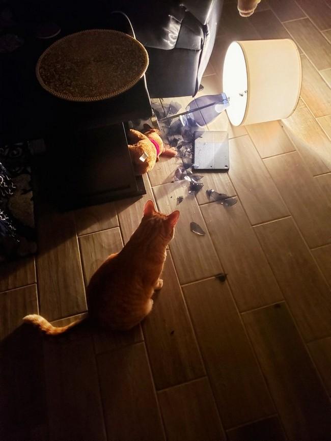 gatos malvados (25)