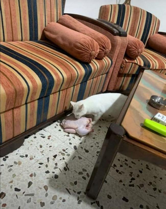 gatos malvados (26)