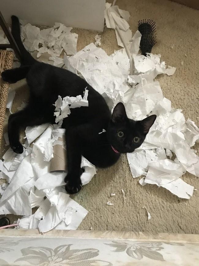 gatos malvados (3)