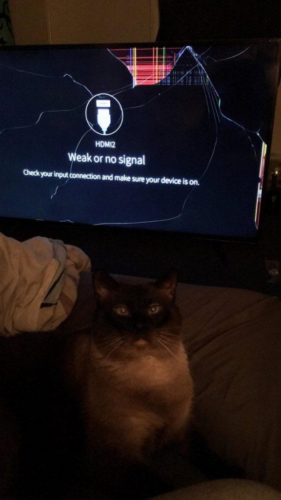gatos malvados (6)