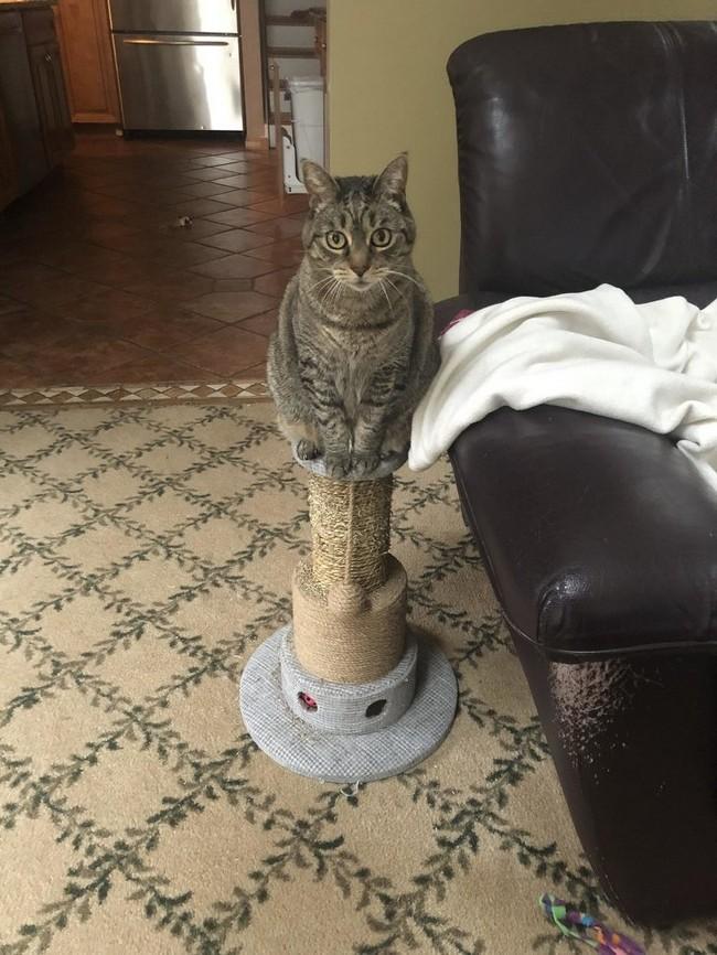 gatos malvados (8)