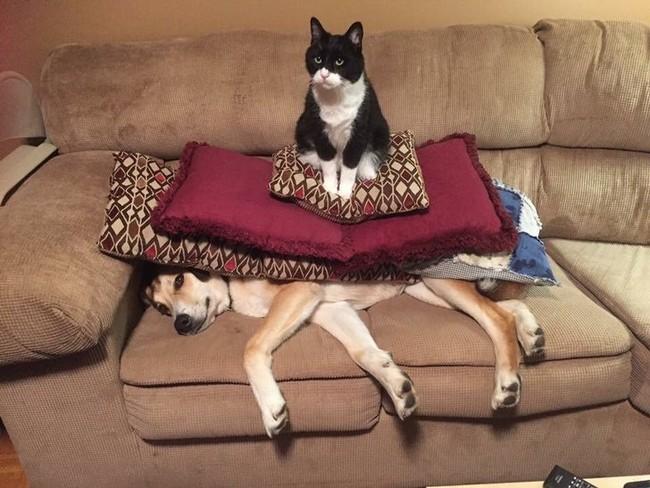 gatos malvados (9)
