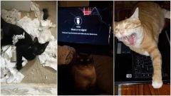 26 gatos que son una calamidad para sus dueños
