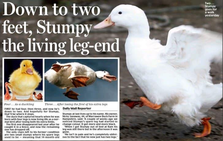 stumpy el pato de cuatro patas