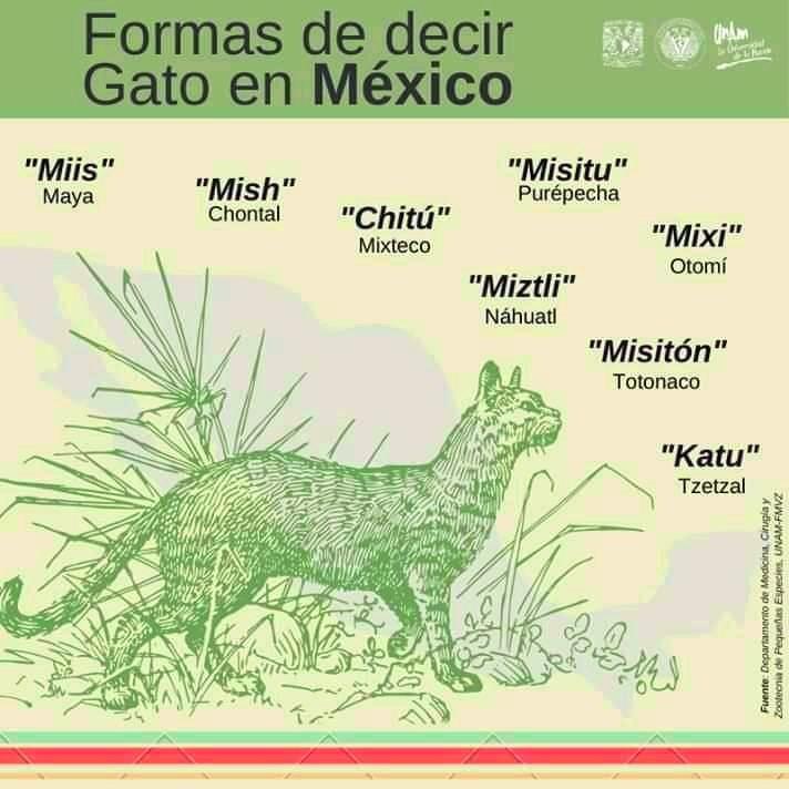 Marcianadas 416 30012020001442 (183)
