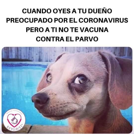 Marcianadas 416 30012020001442 (263)