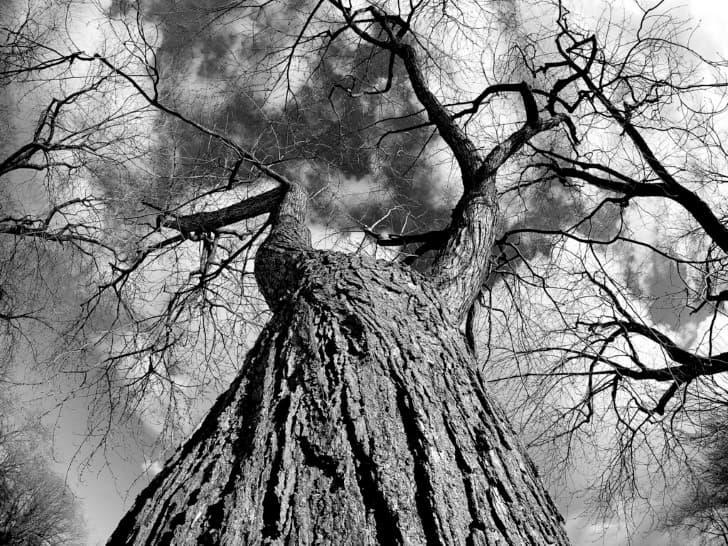 arbol viejo corteza