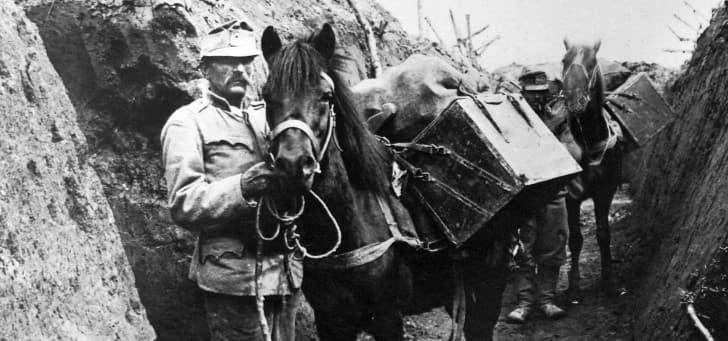 caballos en las trincheras