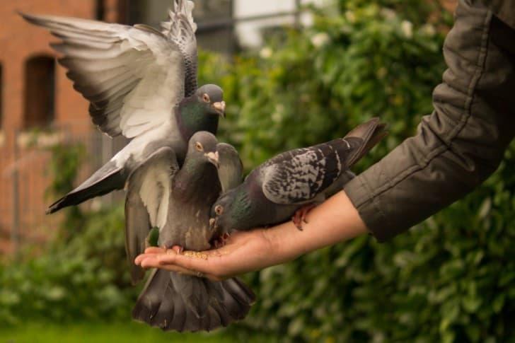 palomas en la mano