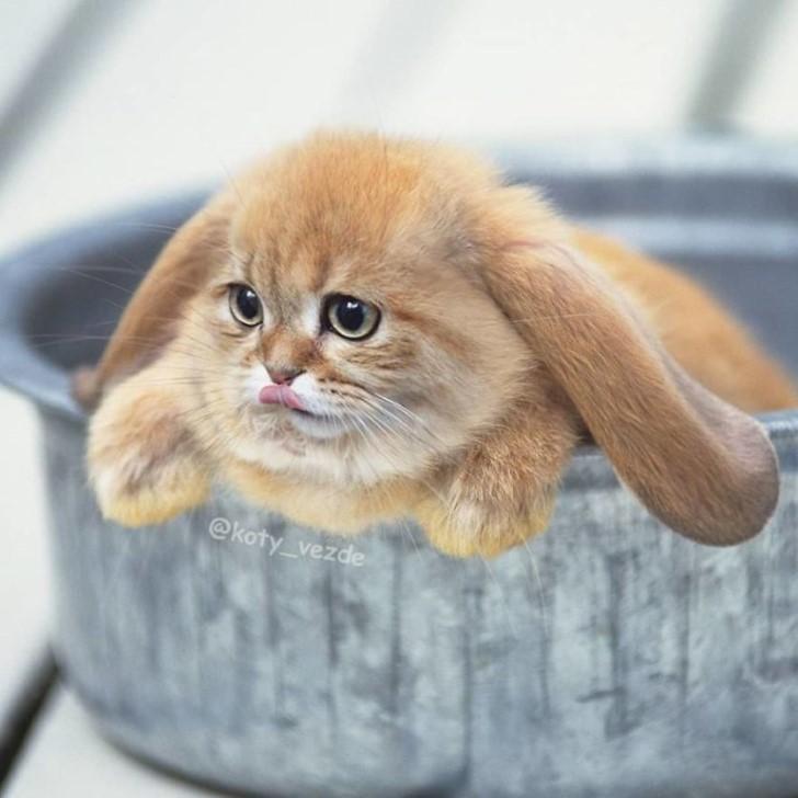rostros de gatos en las cosas photoshop (10)