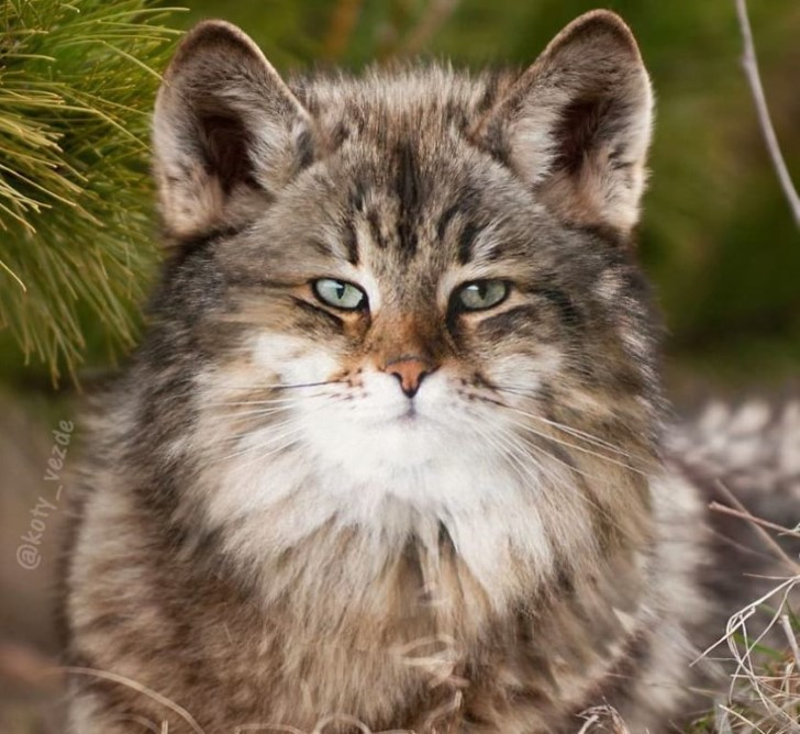 rostros de gatos en las cosas photoshop (18)