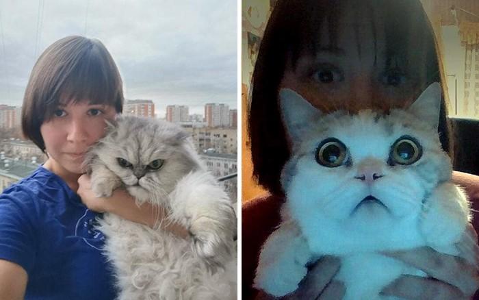 rostros de gatos en las cosas photoshop (29)
