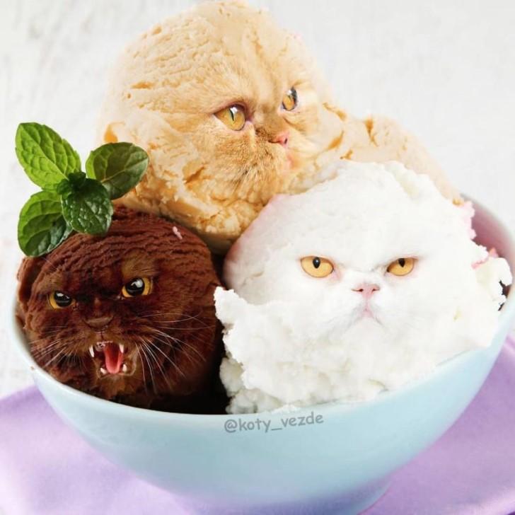 rostros de gatos en las cosas photoshop (4)