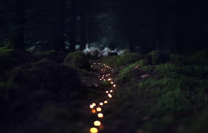 suelo con vegetacion y luces