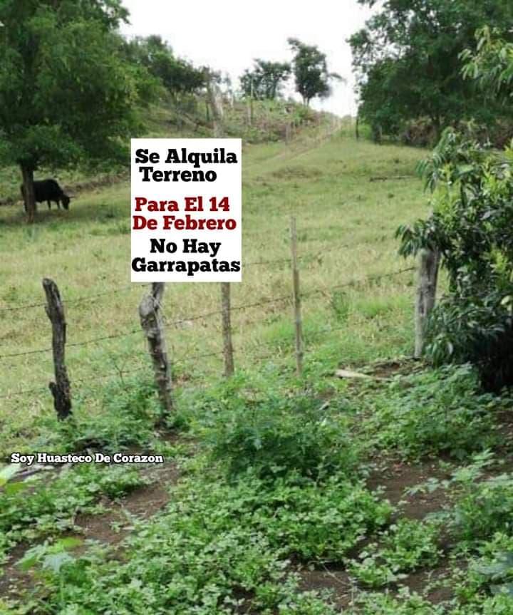 Marcianadas 417 0702020 (87)