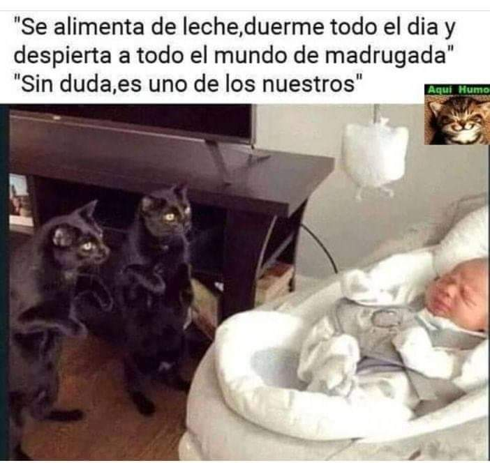 Marcianadas 419 21022020001301 (140)