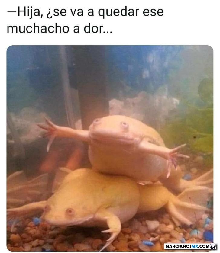 Marcianadas 419 21022020001301 (253)