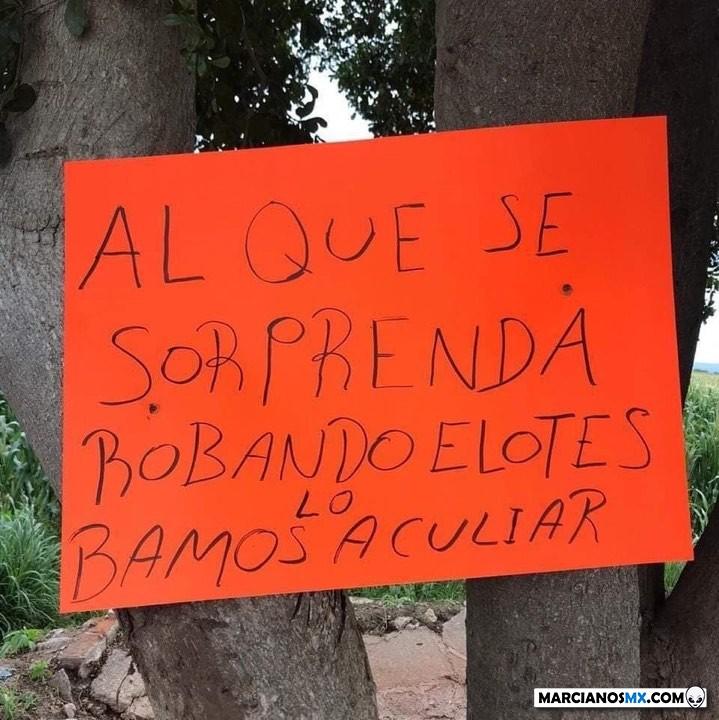 Marcianadas 419 21022020001301 (46)