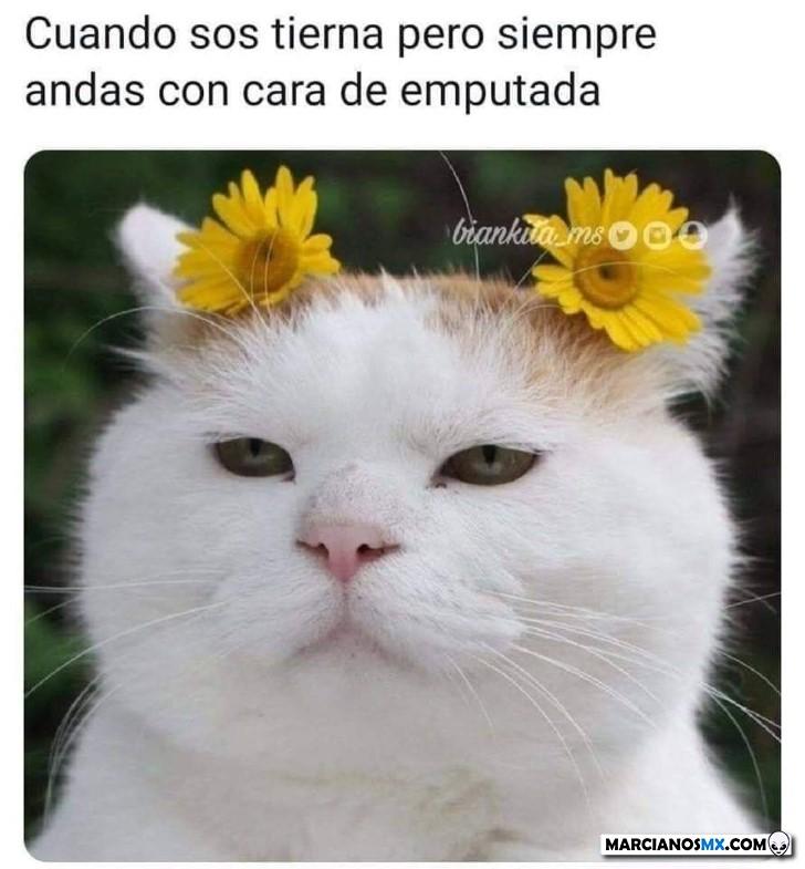 Marcianadas 419 21022020001301 (69)