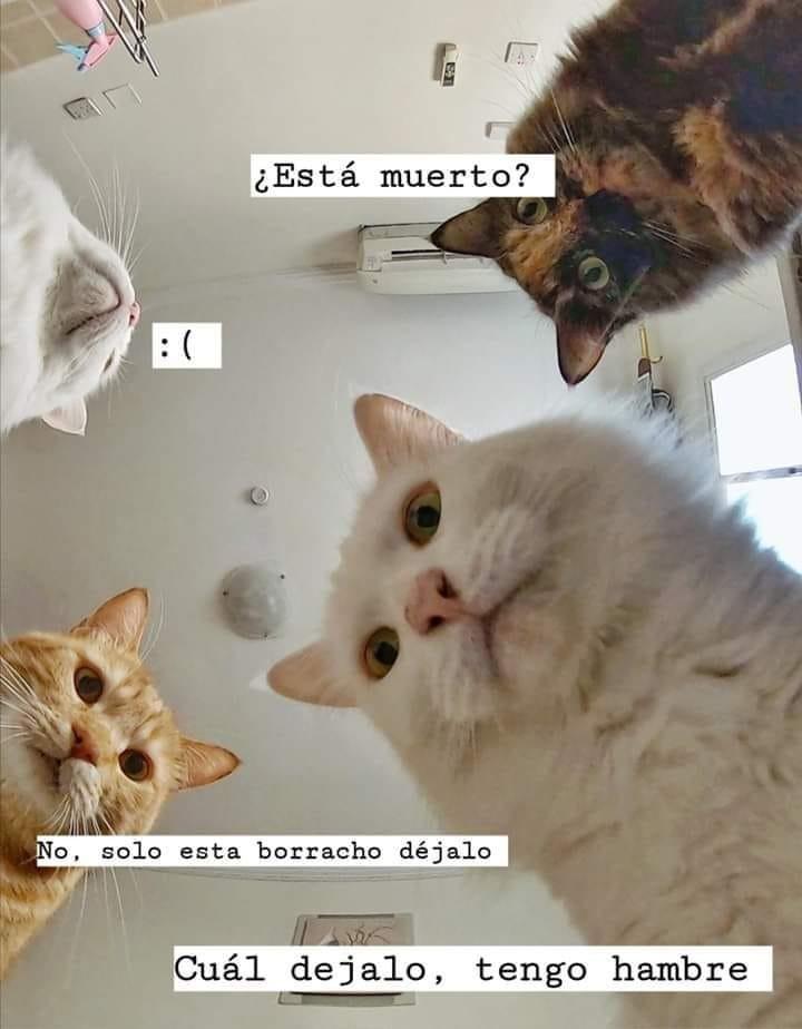 Marcianadas 420 28022020 (91)