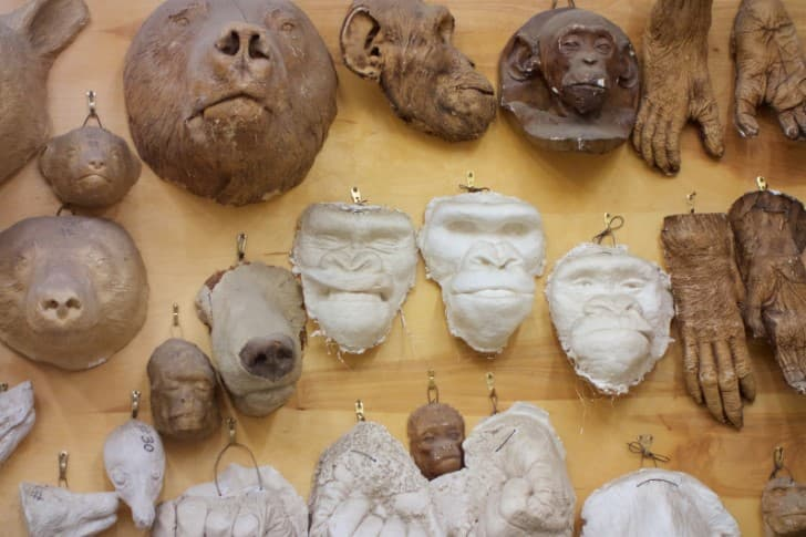 Moldes de Taxidermia