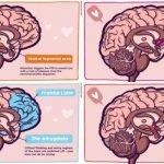 asi funciona el amor en el cerebro